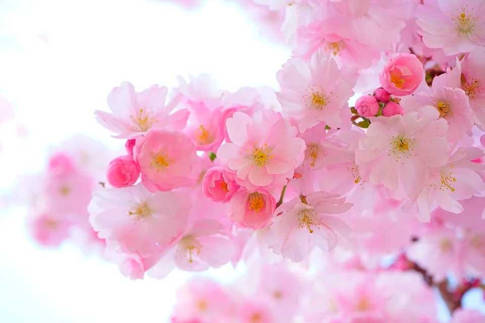 que son las flores